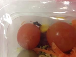 Avispa disfrutando de un tomate